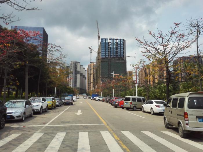 龙华文化广场的木棉花开了,真是一堵风景